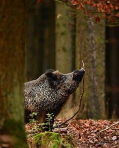 Essbare Wildtiere