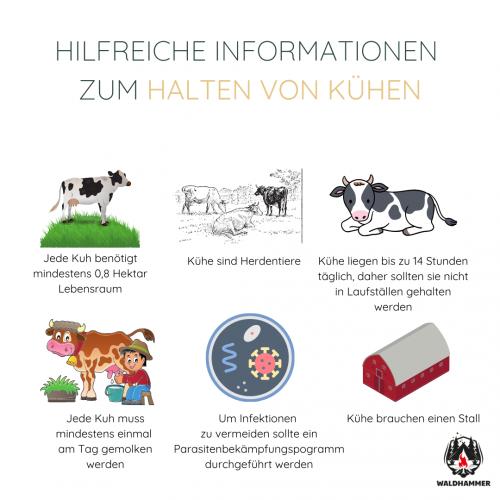 Hilfreiche Informationen zum Halten von Kühen